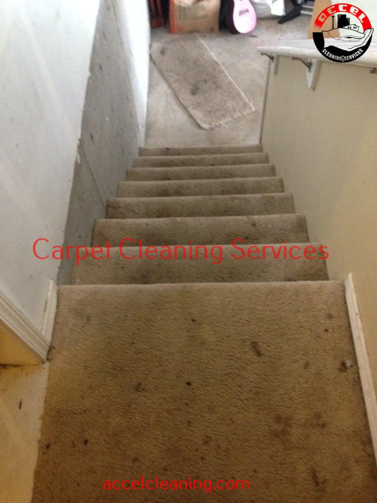 Carpet Cleaning Kirkland WA